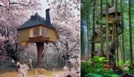 Những ngôi nhà trên cây tuyệt đẹp đưa bạn về thế giới tuổi thơ