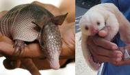 18 em bé động vật dễ thương đến mức bạn chỉ muốn... bắt về nhà nuôi