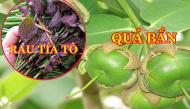 Ít ai ngờ 7 loại rau quả dại phổ biến ở Việt Nam lại là thuốc quý hiếm, khá đắt đỏ ở nước ngoài