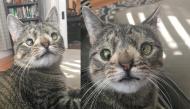 Xót xa chuyện cô mèo suýt bị giết chết chỉ vì mắc tật lé mắt bẩm sinh