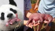 Ngắm nhìn khoảnh khắc chào đời dễ cưng hết nấc của các loài động vật