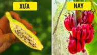Trước khi được bàn tay con người lai tạo, các loại cây trồng đã có hình dạng thế nào?
