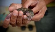 Mèo con mới sinh được nhặt ven đường, nhưng ai cũng không ngờ điều xảy ra sau đó