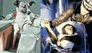 Kết cục buồn cho số phận bi thương của những sinh vật đầu tiên được đưa vào vũ trụ