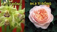 Sửng sốt với 8 loài hoa đắt nhất thế giới có giá trị bằng cả một gia tài