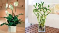 Top 10 loại cây bạn nên trồng trong nhà để hút chất độc hại và tốt cho sức khỏe