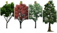Cái cây thích nhất sẽ cho bạn biết vận may sắp đến của mình là gì