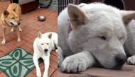 Chú chó bỏ ăn vì nhớ thương người bạn đã mất và sự thật phũ đến ngớ người