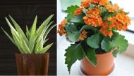 Những loại cây trồng vừa mang năng lượng tích cực vừa thu hút tiền tài cho gia đình trong năm mới
