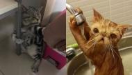 Nếu bạn nghĩ rằng mèo cũng sợ nước thì đây mới là sự thật nhé