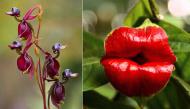 Top 10 loại hoa lạ lùng nhưng có hình dáng quen thuộc khiến ai thấy cũng sững sờ