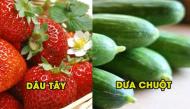 Những thực phẩm mang lại hơi thở thơm mát hiệu quả hơn cả kẹo cao su
