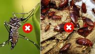 3 mẹo hay giúp diệt côn trùng trong nhà cực đơn giản mà lại không độc hại