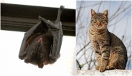 Bạn sắp gặp may mắn hay điềm gở khi những động vật này bất ngờ vào nhà?