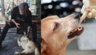 Các món ăn sở thích của con người, nhưng lại gây hại cho cún cưng của bạn đấy!