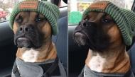 Sự thật đẫm nước mắt đằng sau hình ảnh chú chó đội mũ len trông như rapper