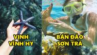 Những điểm lặn ngắm san hô tuyệt đẹp tại Việt Nam mà dân du lịch không thể bỏ qua