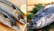 Ăn cá rất tốt nhưng 8 loại này bác sĩ khuyên không nên dùng nhiều