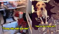 """Ngày mà chú chó cưng của bạn bỗng trở thành """"kẻ phá hoại"""" trong gia đình"""