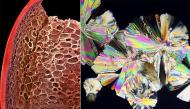 Đố bạn đoán được đây là hình ảnh của những thực phẩm nào soi dưới kính hiển vi?