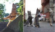 Bộ ảnh cực đáng yêu của những chú mèo ninja khiến cộng đồng mạng thả tim rần rần