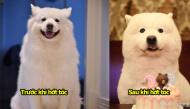 Chú chó đi làm đẹp bỗng dưng trở thành gấu Bắc Cực đáng yêu