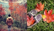 """Rừng phong đỏ đẹp mê hồn thu hút những """"thánh sống ảo"""" chính hiệu"""