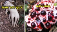 Top những loài thực vật kì dị đến nỗi chẳng ai tin chúng lại có thật trên đời
