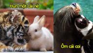 Xúc động trước tình bạn thân thiết của những con vật dễ thương dù cho có khác giống loài