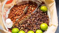Thế giới sắp xảy ra nạn đói, hãy tập ăn côn trùng ngay hôm nay