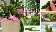 Không cần tốn nhiều tiền bạn cũng có thể nhân giống cả khu vườn xanh mát chỉ từ những chiếc lá