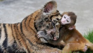 Bộ ảnh các bé động vật đáng yêu đến mức làm trái tim người xem phải tan chảy