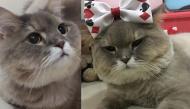 """Bone Bone – từ chú mèo """"ú nu ú na"""" ngổ ngáo trở thành ngôi sao mạng xã hội vạn người mê"""