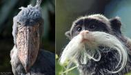 """Top 34 loài động vật kì lạ """"không thể tin nổi"""" chúng có thật trên đời"""