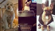 """Tạm quên Rich Kids, những chú """"Rich Dogs"""" mới là nhân vật trung tâm trên mạng xã hội"""