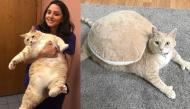 """""""Con sen"""" than trời vì không thể nào giúp chú mèo béo ục ịch giảm cân nhanh chóng"""