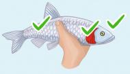 """Mẹo chọn cá tươi ngon """"chuẩn xịn"""" chị em nội trợ nào cũng phải nằm lòng"""