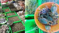 """Điểm danh các khu chợ bán hải sản rẻ nhất Vũng Tàu, vừa tươi ngon vừa không lo bị """"chặt chém"""""""