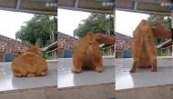 Cười đau bụng với loạt clip thú cưng gây bão mạng xã hội ngày 09/08