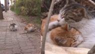 Cảm động chú mèo luôn ở bên cạnh người bạn khuyết tật để chăm sóc và bảo vệ