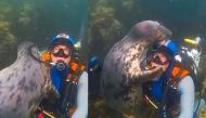 """Phản ứng siêu đáng yêu của chú hải cẩu biển khiến người xem như muốn """"tan chảy"""""""