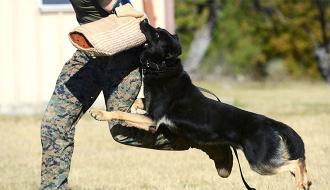 Bạn cần phải làm gì khi bị chó dữ bất ngờ tấn công?