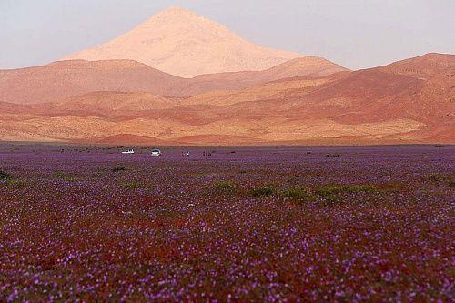 bestie hoang mạc Atacama
