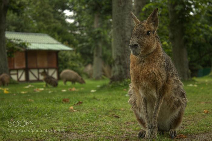 Top 34 loài động vật kì lạ