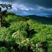 Rừng rậm nhiệt đới