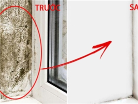 Cách hay dọn sạch nấm mốc từng ngõ ngách cho nhà cửa tinh tươm đón Tết