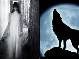 Chó tru hoặc sủa vào ban đêm có phải là do nhìn thấy ma?