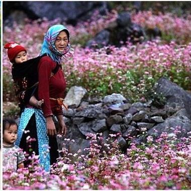 """Lên kế hoạch để vi vu """"săn hoa"""" suốt cả năm cho những ai đam mê xê dịch"""