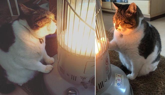 Chết ngất với chú mèo ú nụ ôm đèn sưởi khiến các sen điêu đứng