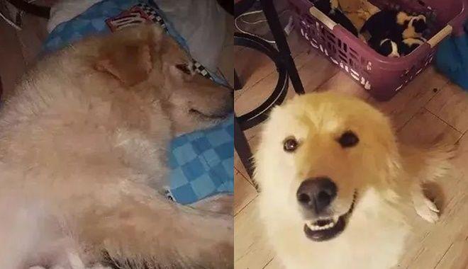Đau lòng hình ảnh chó mẹ bỏ ăn bỏ uống vì mất con trong trận hỏa hoạn cháy nhà